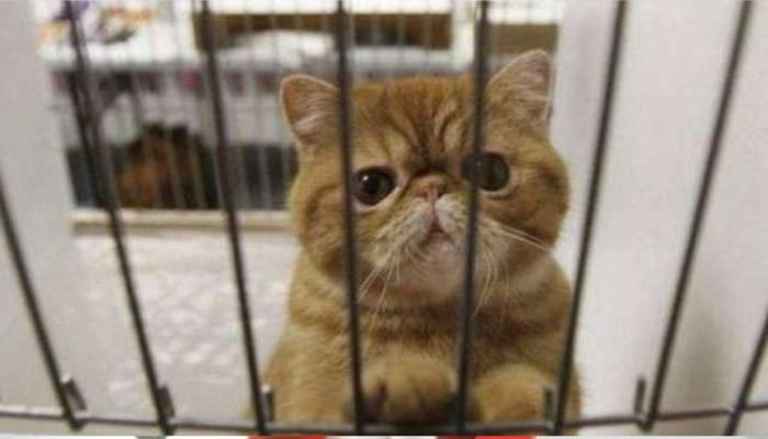 Covid19 To Cat: యూకేలో పిల్లికి కోవిడ్-19 నిర్ధారణ