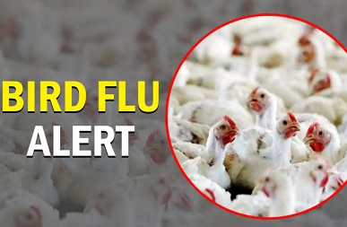Bird flu outbreak reported in Himachal Pradesh, Kerala, Madhya Pradesh and Rajasthan
