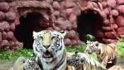Hyd Zoo: మూడు పిల్లలకు జన్మనిచ్చిన ఆశా, కల్నల్ సంతోష్ బాబు పేరు