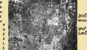 Photo puzzle: ఈ ఫోటోలో దాగి ఉన్న Tiger ని గుర్తించగలరా ?