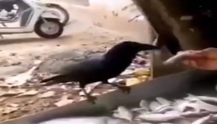 Viral Video: ఈ కాకి బుద్ధిని చూస్తే మెచ్చుకోకుండా ఉండలేరు