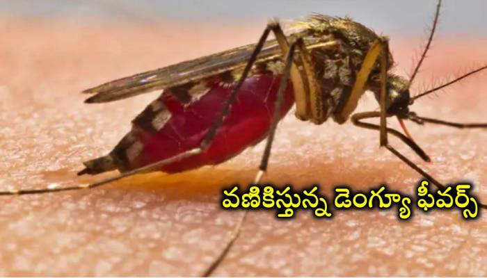 Dengue: ఓవైపు కరోనా కల్లోలం.. మరోవైపు  డెంగ్యూ డేంజర్ బెల్స్..ఏపీలో విపత్కర పరిస్థితులు