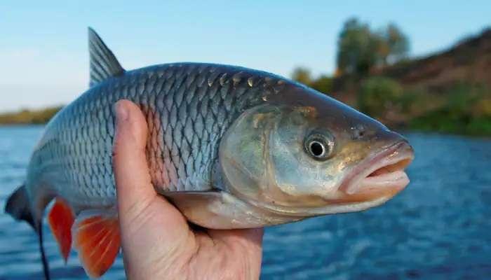 Fish Egg Benefits : చేప గుడ్ల ద్వారా వచ్చే ఆరోగ్య ప్రయోజనాలు తెలుసా?